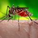 zika-virus-mosquito-8978da9953014e3291ffb281794a4c481ff39376