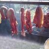 meat-preservation-6ec66fe7c6e5d72b065f46de7a4c64884c33538f