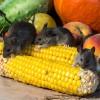 vegetables-928977_640-9edd5d6d059d16ea811bdd53cacbe31d12396e64