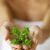 Herbal-Remedies-for-Thyroid-Health-824c02ffc3770d2c79704332b3db9313f238e678