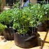 PotatoGrowBags-300x199-3c620984aff12d5750c2eba8643f1787172f3aed