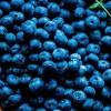 Beat-UTI-With-Blueberries-ft-770x402-0e94494c02cf0ec8316fc7ccaaace079c6e36b92