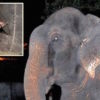 Elephant-Weeps-While-Being-Rescued-After-50-Years-Of-Confinement-2-9c13e1f60a07a9e1fb7073aa0fc6b6bbfac824a7