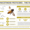 Neonicotinoid-Pesticides-Their-Effect-on-Bee-Colonies-The-Facts-1-1-e1478269413289-e67359e431ed174277025cd7cd849eb8dfa1d144